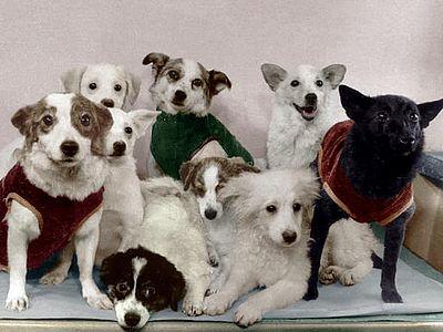 Советские собаки-космонавты и их потомство