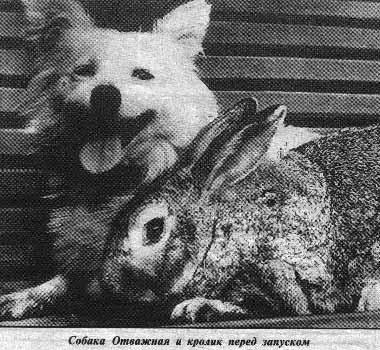 Собака-космонавт Отважная и кролик-космонавт Серый