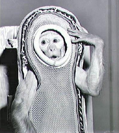 Макак-резус Сэм, совершивший суборбитальный полёт на корабле Литл Джо-2 в 1959 году