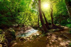 Где протекают реки-малютки?