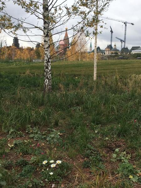 Осенние ромашки разнообразят несколько унылый вид