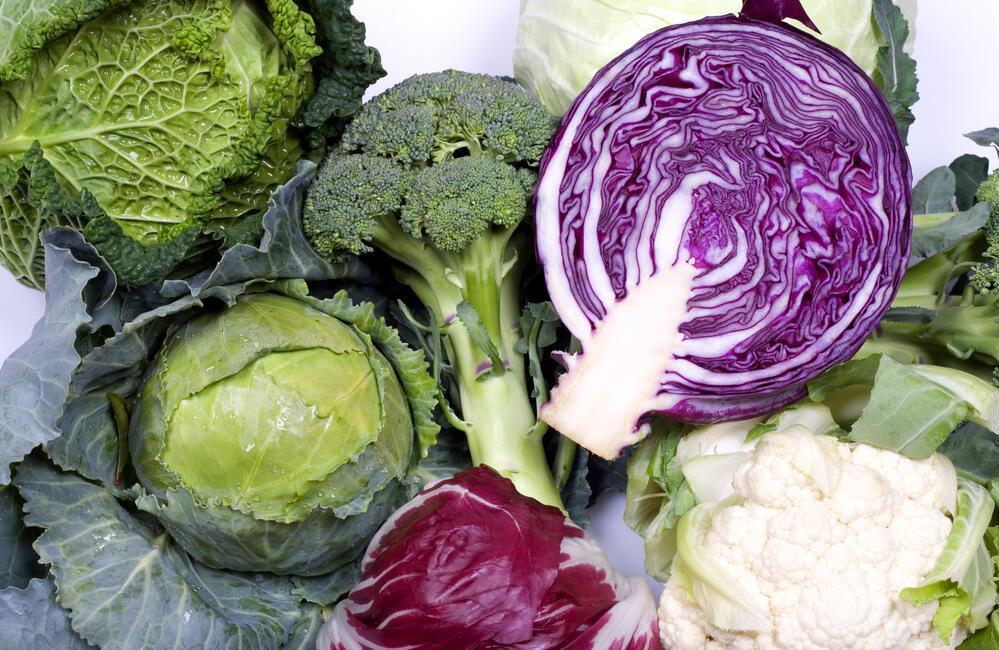 Почему звание «борцы с болезнями» присвоено овощам семейства крестоцветных?