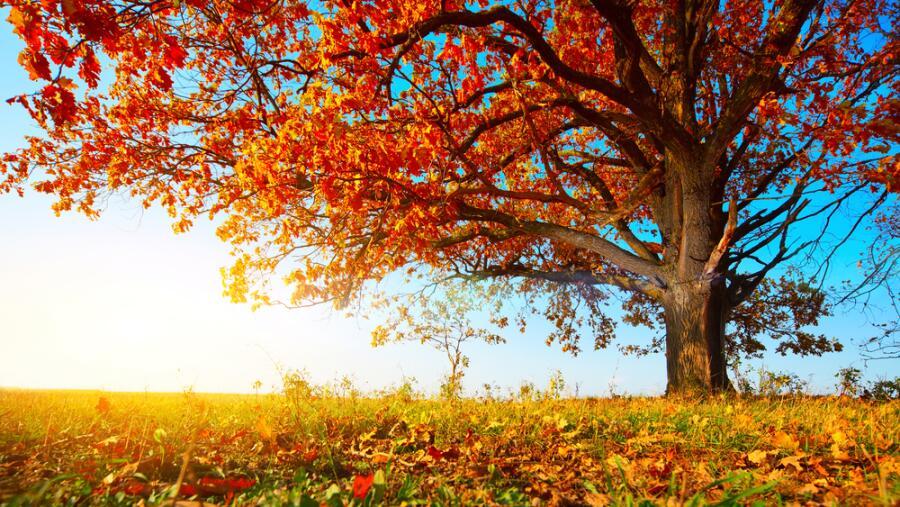 Куда улетают осенние листья? И от тайги до британских морей…