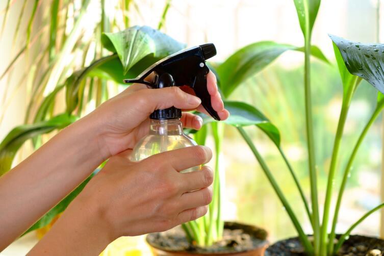 Как поливать комнатные растения зимой?