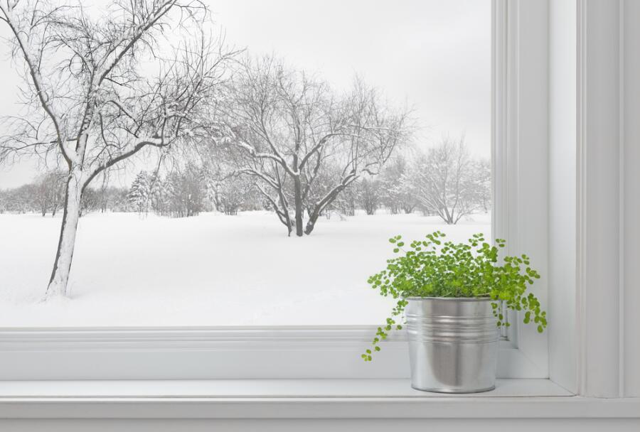 Как перевозить комнатные растения зимой?
