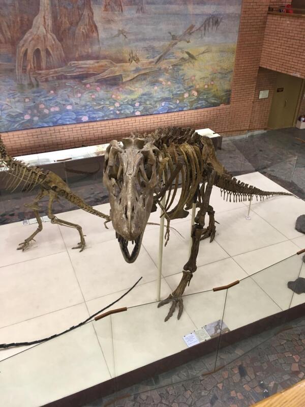 Пожалуй, самый «симпатяга» в музее.