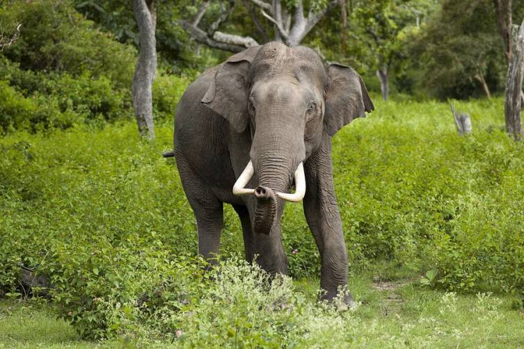 Секс у слонов и бегемотов бесплатные фото