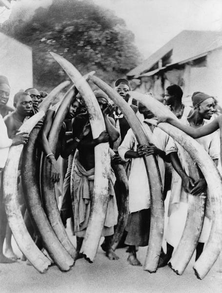 Мужчины с бивнями слона в Дар-эс-Саламе, Танзания, 1900 г.