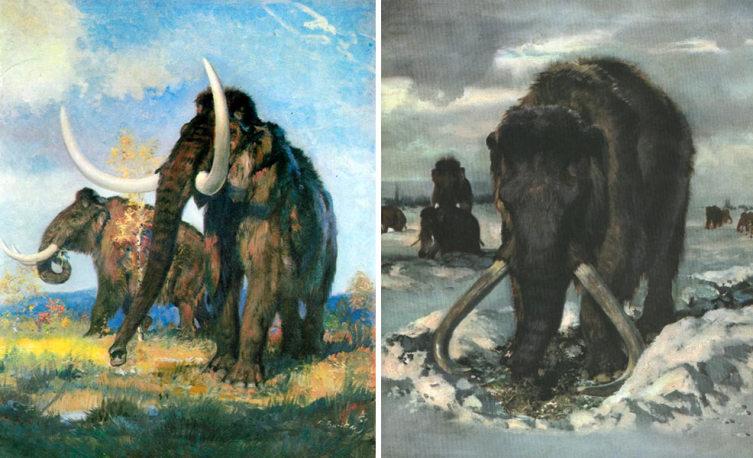 Шерстистые мамонты