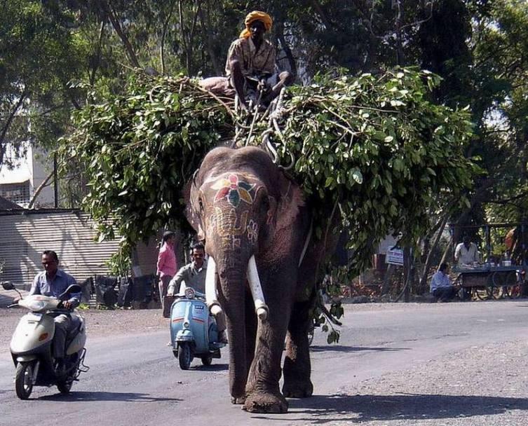 Слонопедия–6. Правда ли, что слоны ничего не забывают?