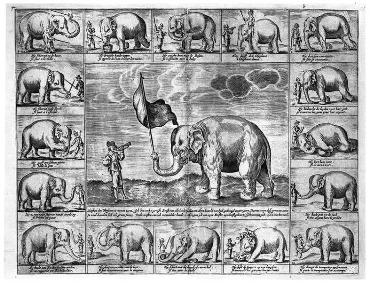 Изображение трюков слонихи Ханскен