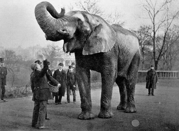 Джамбо на фото 1882 года