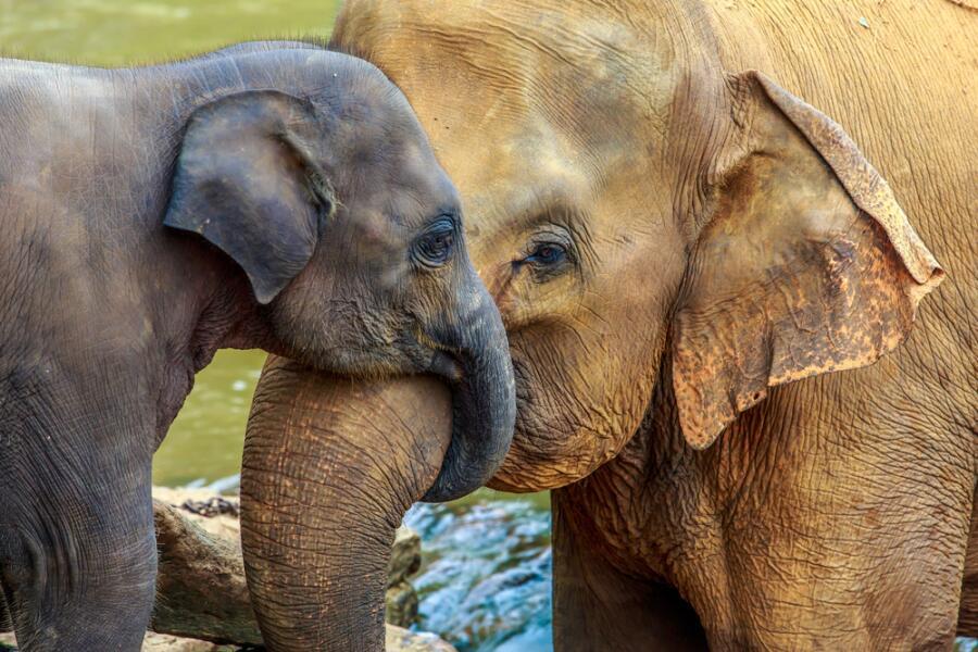 Слонопедия–1. Что означает фраза «розовый слон в комнате»?