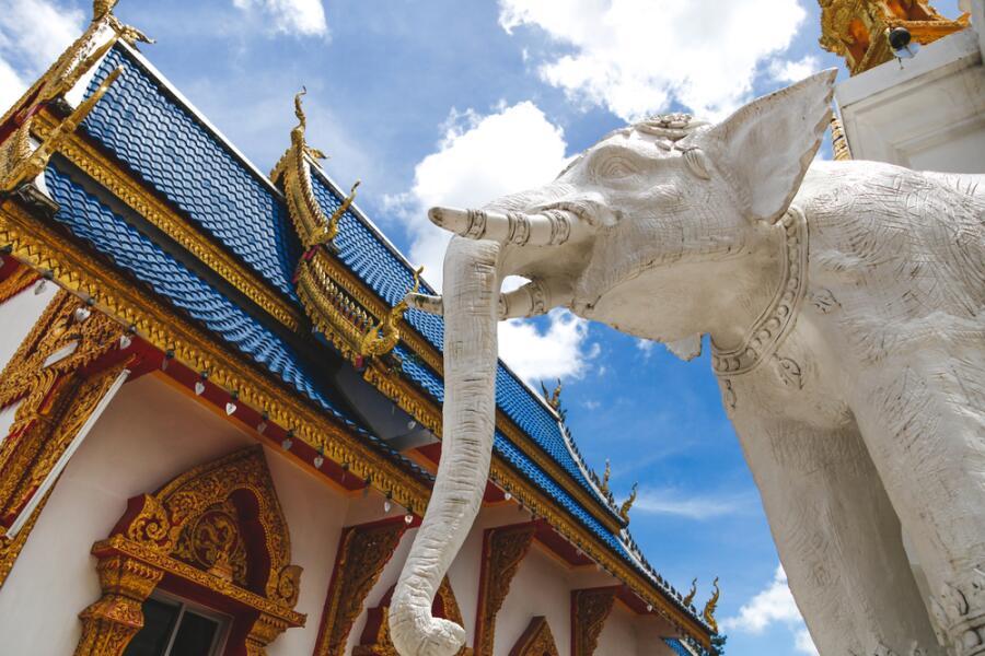Слонопедия–2. Зачем дарят белого слона?