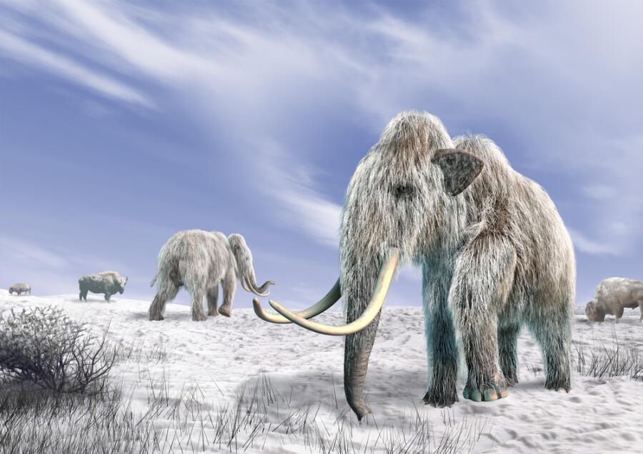 Слонопедия–5. Правда ли, что Россия - родина слонов?