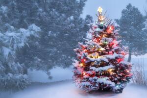 Новогодняя ёлка: живая или искусственная? Руководство по выбору