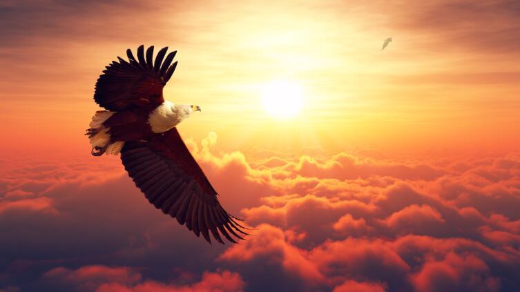 Орел предвещает победу