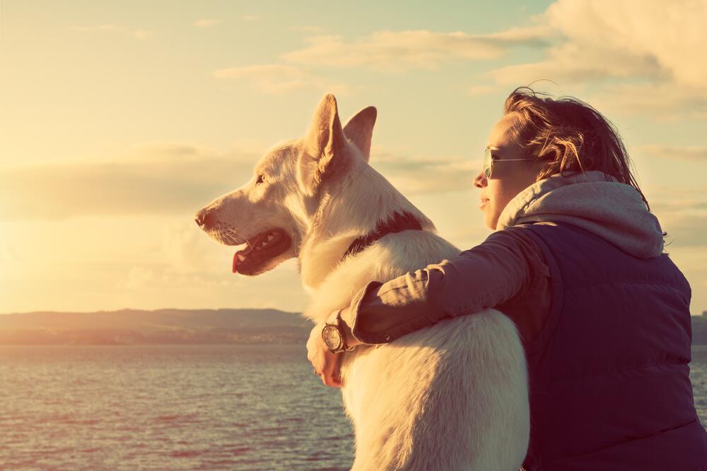 большинства смотреть картинки собаки и люди своему экономическому потенциалу