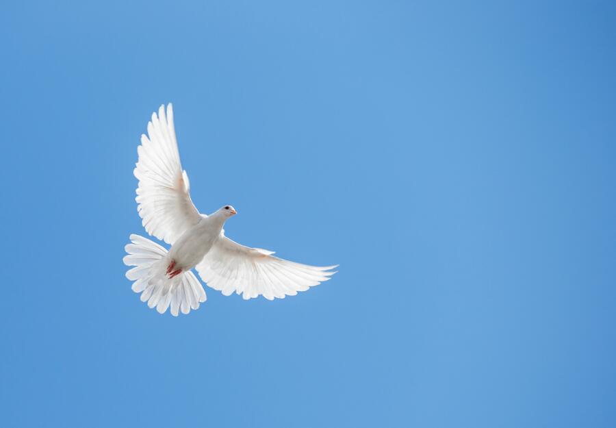 Странствующий голубь. Почему он исчез?