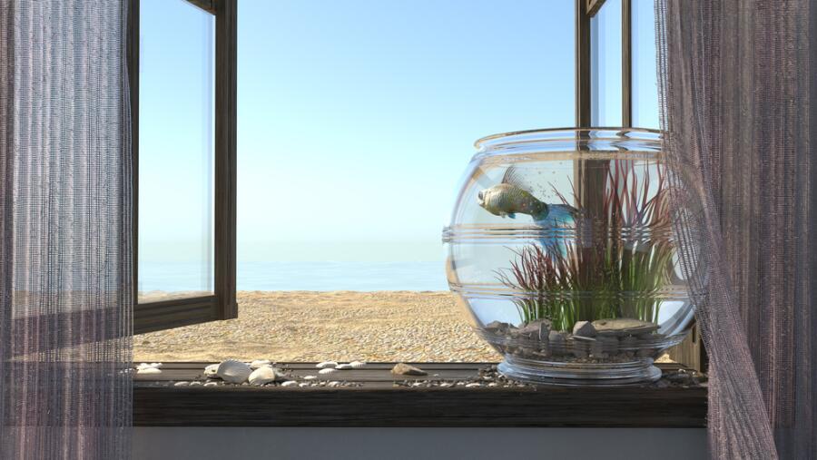 Что водные обитатели могут думать о людях? Монолог рыбы из офисного аквариума