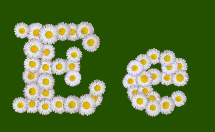 Как родилась буква Е?
