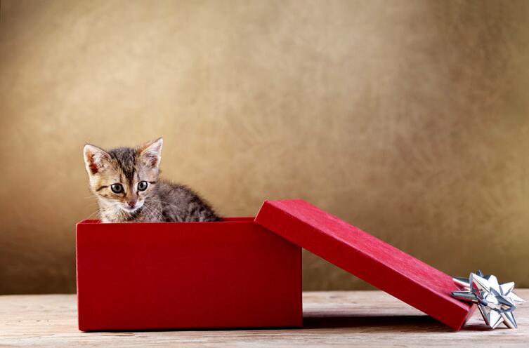 Кошки и коробки. В чем секрет любви?
