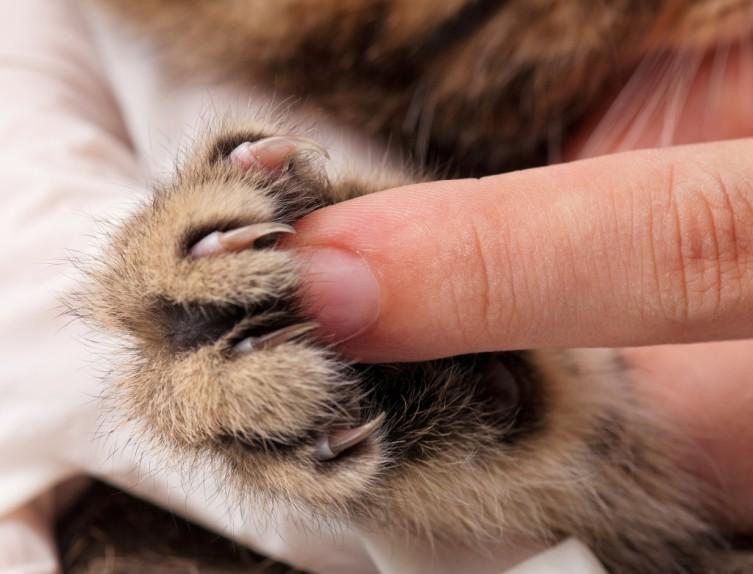 Кошачий «массаж». Почему коты любят топтать лапками?