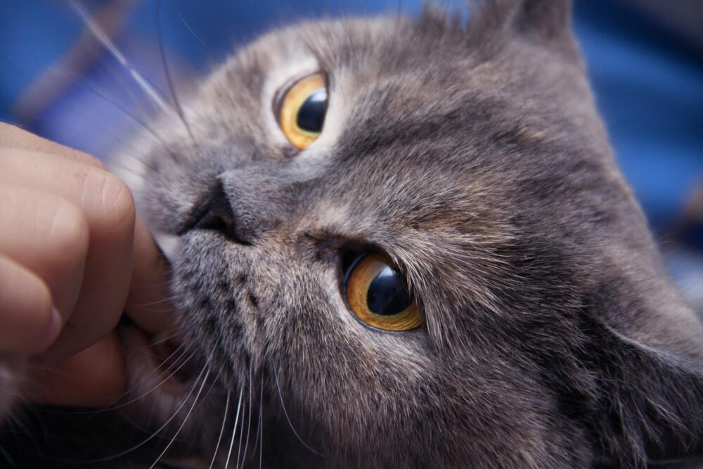 Как общаться с котом? Мифы и заблуждения