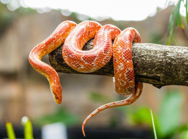 Барбекю из гремучей змеи заказывали? Кушать подано! Пожалуйте…