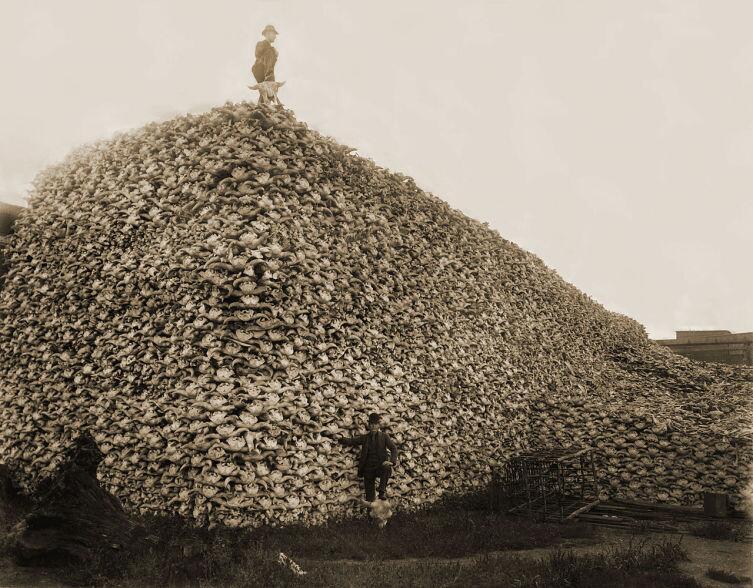 Гора из черепов убитых бизонов, США, 1870 год
