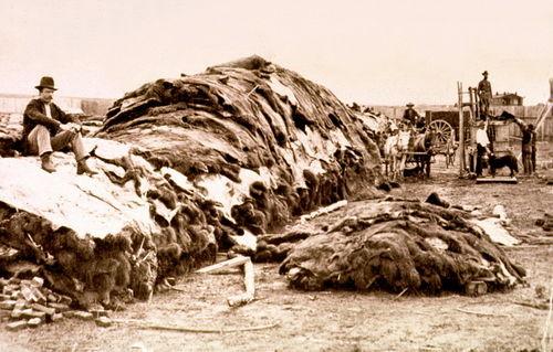 40 000 бизоньих шкур в Додж-Сити, Канзас, 1878 год