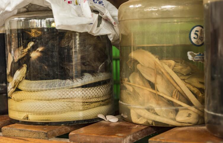 Желчь только что освежеванной змеи — одно из излюбленных укрепляющих средств китайцев