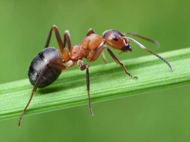 Какие бывают приманки? Часть 4. Стрекоза и муравей