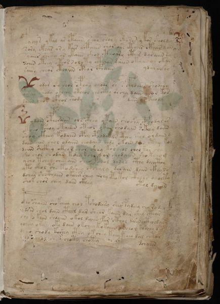 Первый лист «Рукописи Войнича»