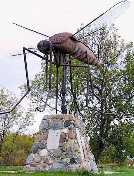 Канадский комар — самый большой в мире