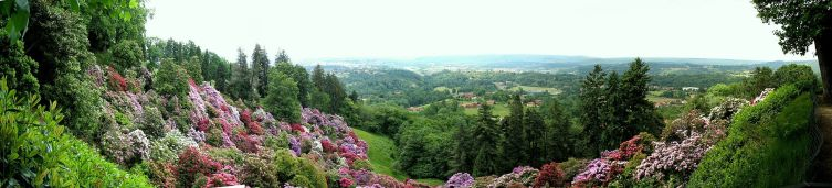 Цветущие рододендроны в парке Parco della Burcina, Пьемонт, Италия
