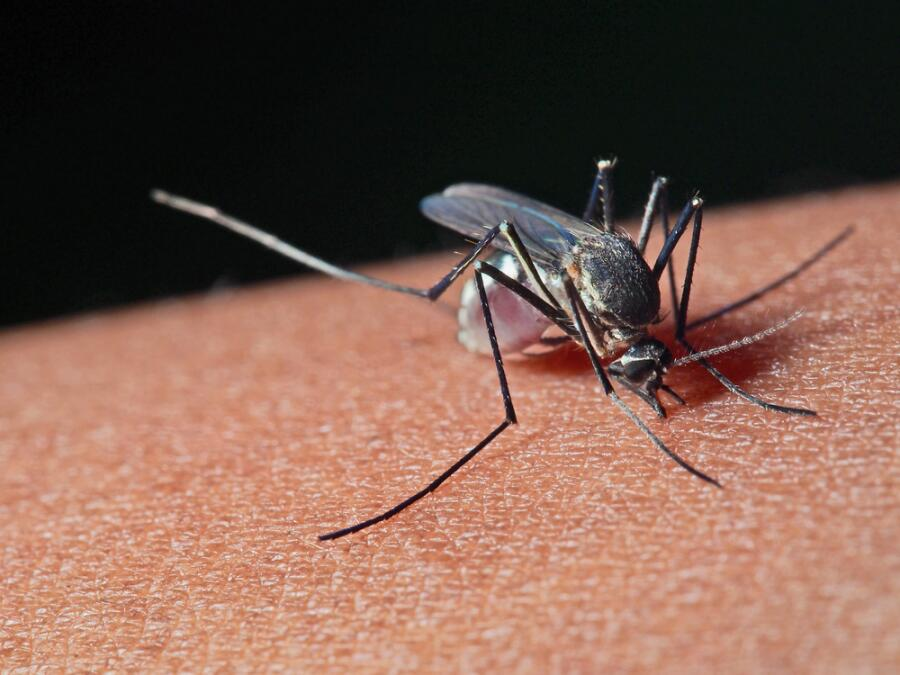За что ставят памятники комарам и паукам?