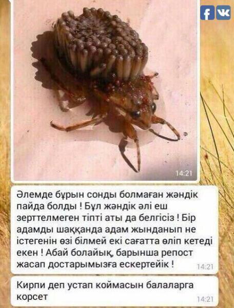 В Казахстане паника