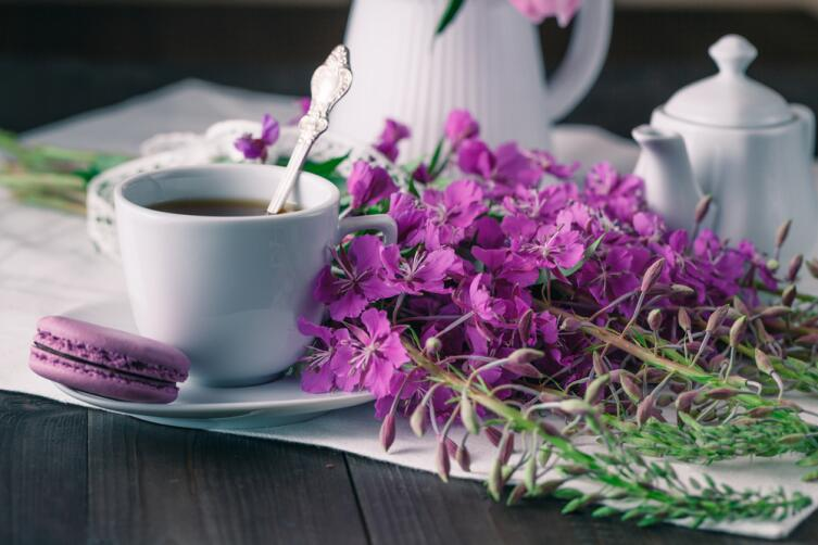Цветы кипрея и кипрейный чай