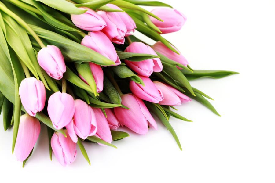 Как вырастить тюльпаны дома?