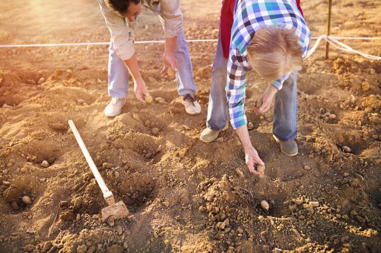 Как что сеять? Секреты огородника