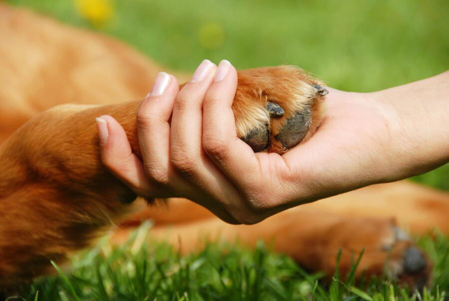 Как нам помогают домашние животные?