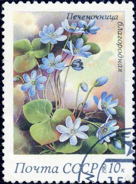 Подробнее Печёночница благородная на почтовой марке СССР, 1983 год