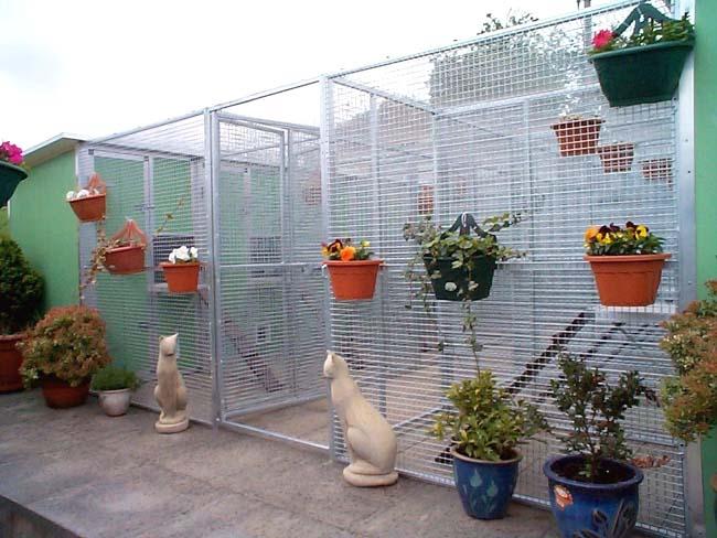 Центр реабилитации «Cats protection»