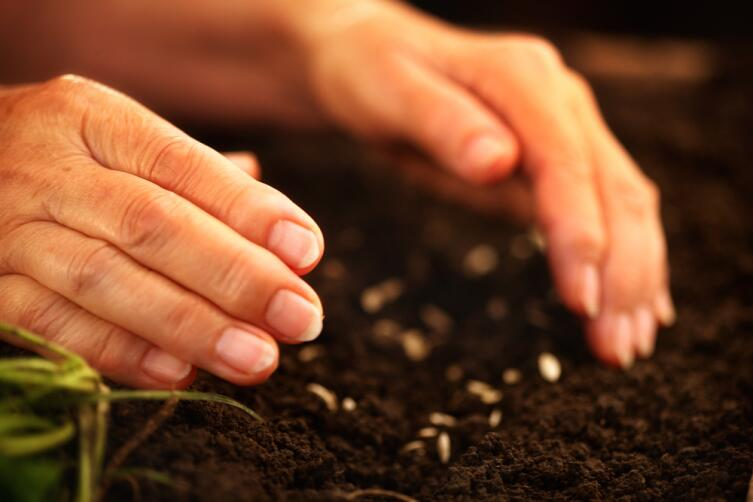 Хотим получить урожай! С чего начать?