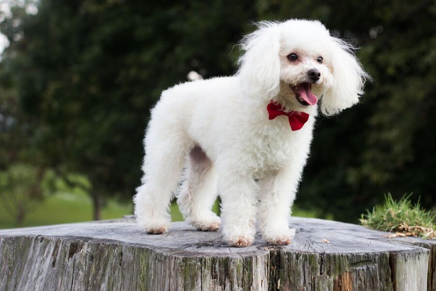 Тяпа. Соображают ли собаки, как люди?
