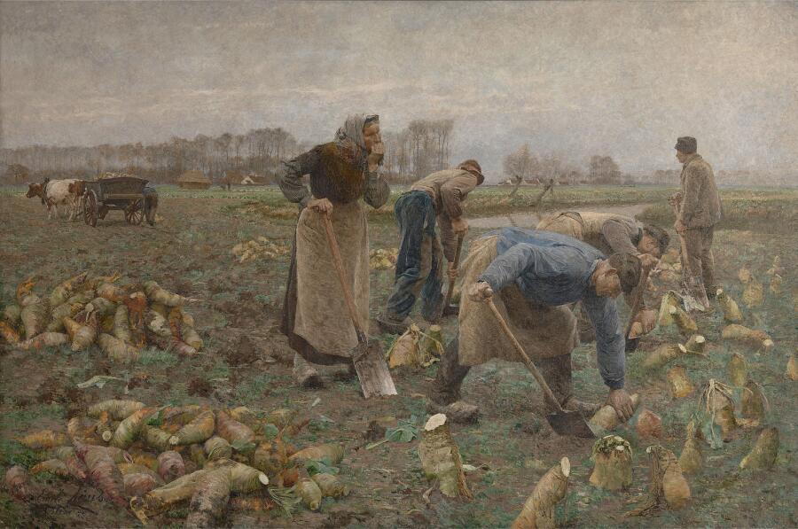 Эмиль Клаус, «Сбор урожая свеклы»