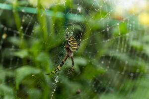 Сетка из паутины, которую мы привыкли видеть – это самая простая ловушка паука