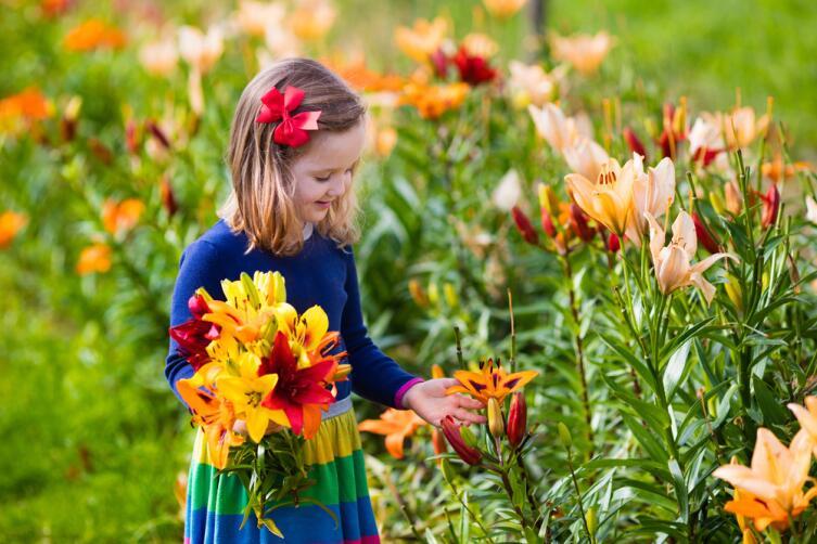 Какие цветы посадить на даче? Лилии