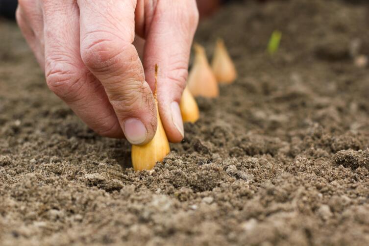 Богатому урожаю способствуют азотные удобрения